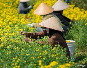 travel-to-vietnam