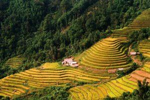 Rice Terraces of Vietnam
